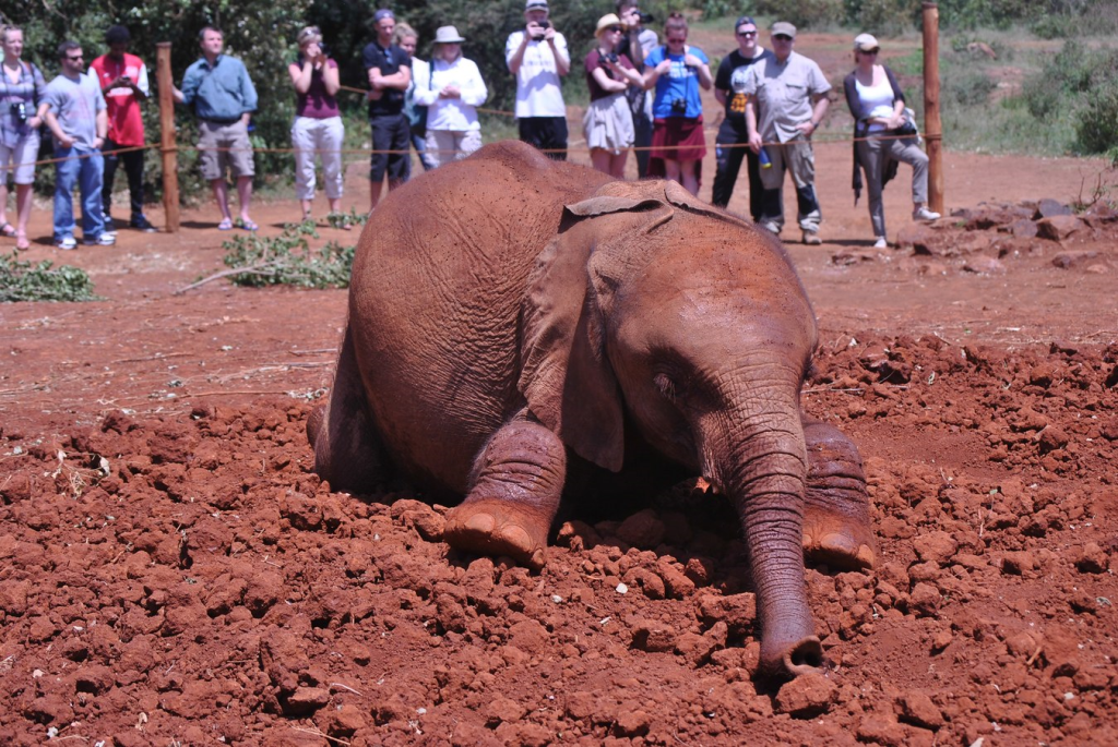 David Sheldrick Wildlife Trust Kenya. Photo courtesy of Holly Wicket https://hwickett.exposure.co/africa