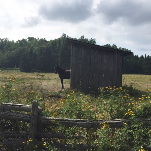 farm-6