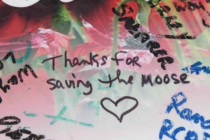 Hundreds of Vets signed Mike Ranta's canoe as he traveled across Canada. One admirer thanked him for Ranta's rescue of a moose calf that Mike was able to capture on video.