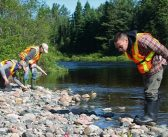 On the Goulais: In Search of Dragonflies
