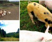 Quattro Farms Coming to a Vendor Near You